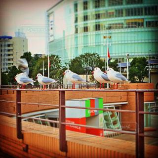 自然,鳥,街,横浜,みなとみらい,神奈川