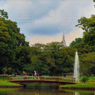 代々木公園の写真・画像素材[463399]