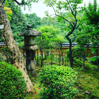 日本庭園の写真・画像素材[463404]
