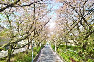 春 - No.573179