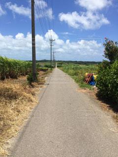 小浜島のさとうきび畑が広がる一本道の写真・画像素材[898127]
