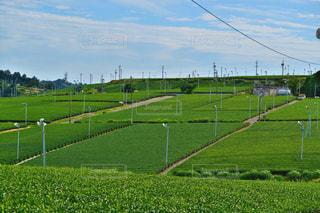 茶畑の写真・画像素材[1046443]