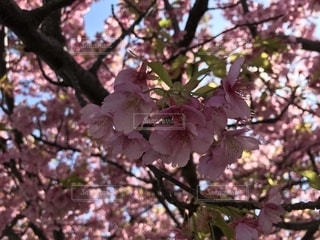 春の色 - No.1126947