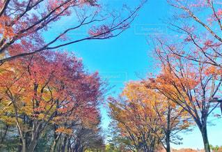 近くの木のアップの写真・画像素材[1135402]