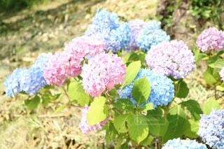 近くの花のアップの写真・画像素材[1135415]