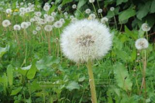 近くの花のアップの写真・画像素材[1135421]