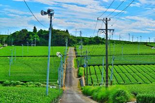 日本の茶畑の写真・画像素材[1166697]