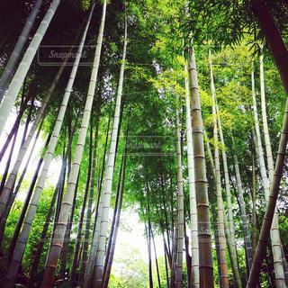 東京の中の自然の写真・画像素材[1166716]