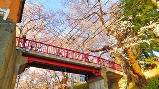 自然,花,春,カメラ,桜,東京,白,散歩,花見,ハート,お花見,外,旅行,明るい,ミラーレス,神奈川,ライフスタイル,多摩川,桜坂,ミラーレスカメラ