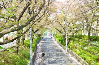自然,空,花,春,桜,青空,散歩,花見,お花見,外,旅行,昼,幸せ,明るい,ミラーレス,神奈川,ライフスタイル,桜坂,ミラーレスカメラ