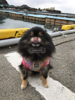 ビーチに座っている犬の写真・画像素材[1213051]