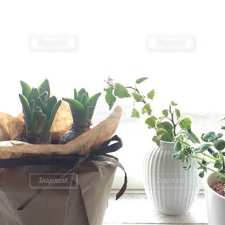 キッチン,植物,リボン,ナチュラル,ヒヤシンス