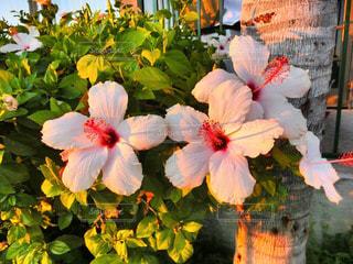 近くの花のアップの写真・画像素材[891287]