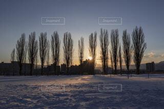 夕日とポプラの写真・画像素材[4139373]