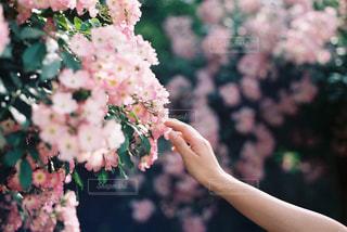 花を持っている手の写真・画像素材[1440663]
