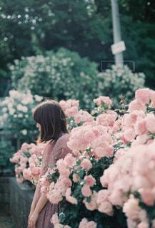 ピンクの花を見た人の写真・画像素材[2468194]