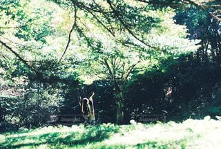 森の中の木の写真・画像素材[4409346]