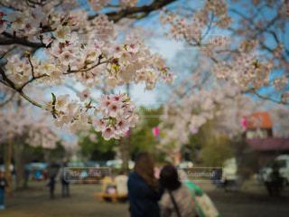 春の写真・画像素材[428173]