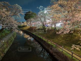 春の写真・画像素材[428176]