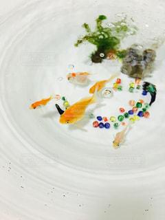 金魚鉢の写真・画像素材[283779]