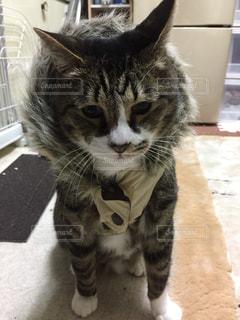猫の写真・画像素材[288113]
