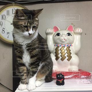 猫 - No.504753