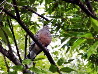 木の枝にとまった鳥の写真・画像素材[726451]