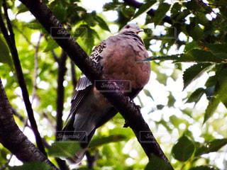木の枝にとまった鳥の写真・画像素材[726463]