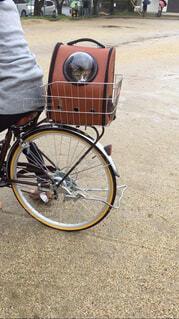 自転車に乗る猫の写真・画像素材[4267192]