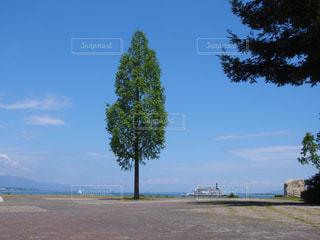 水の体の横にあるツリーの写真・画像素材[1316077]