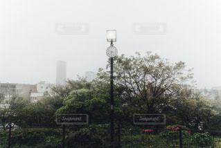 自然,公園,時計,街