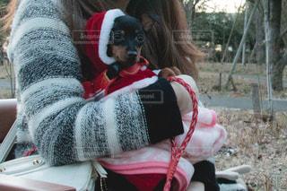 サンタ犬の写真・画像素材[458828]