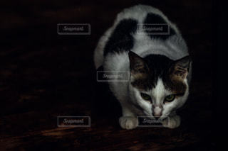 猫 - No.655189