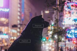 夜の店の前の写真・画像素材[1086165]