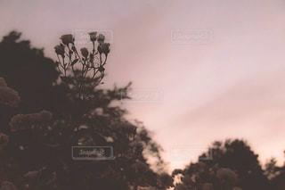 自然,空,花,屋外,ピンク,シルエット,樹木,パステル,儚い,草木,エモい,kt_pics
