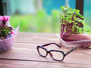 テーブルの上の植物とメガネの写真・画像素材[3816202]