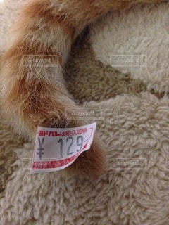 猫の写真・画像素材[31282]