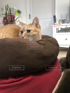 猫の写真・画像素材[300508]