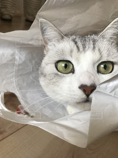 猫の写真・画像素材[317787]