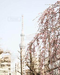春 - No.419360