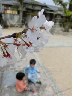 春の写真・画像素材[418780]