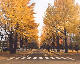 木の隣に空の街の写真・画像素材[840500]