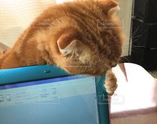 猫の写真・画像素材[275328]