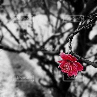 花の写真・画像素材[402928]