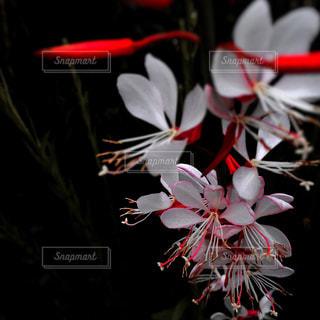 花の写真・画像素材[402931]