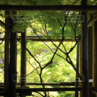 清水寺 - No.457950