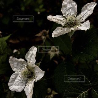 植物の白い花 - No.818341