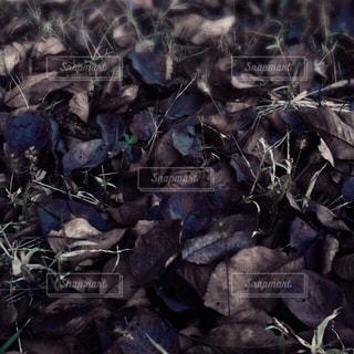 私の秋色の写真・画像素材[875204]