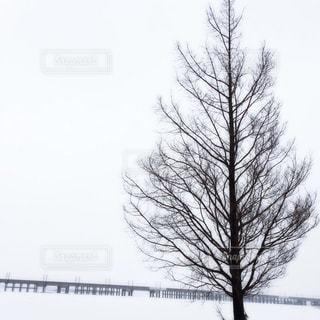 近くの木のアップの写真・画像素材[929978]