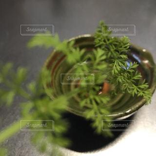 近くの植物のアップ - No.969535